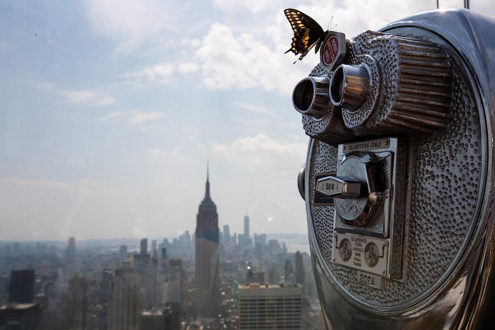 Una farfalle sopra a un telescopio di un belvedere di New York, durante l'eclissi di sole di quest'anno (Drew Angerer/Getty Images)