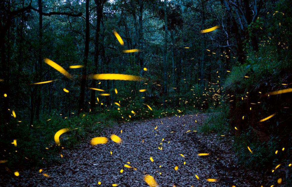 Scie luminose delle lucciole fotografate nel Santuario delle lucciole di Nanacamilpa, in Messico (MARIO VAZQUEZ DE LA TORRE/AFP/Getty Images)