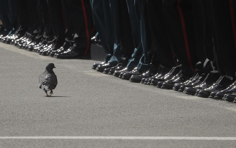 Un piccione passa davanti ai soldati allineati per la parata militare della Giornata della vittoria, San Pietroburgo, 9 maggio 2017 (AP Photo/Dmitri Lovetsky)