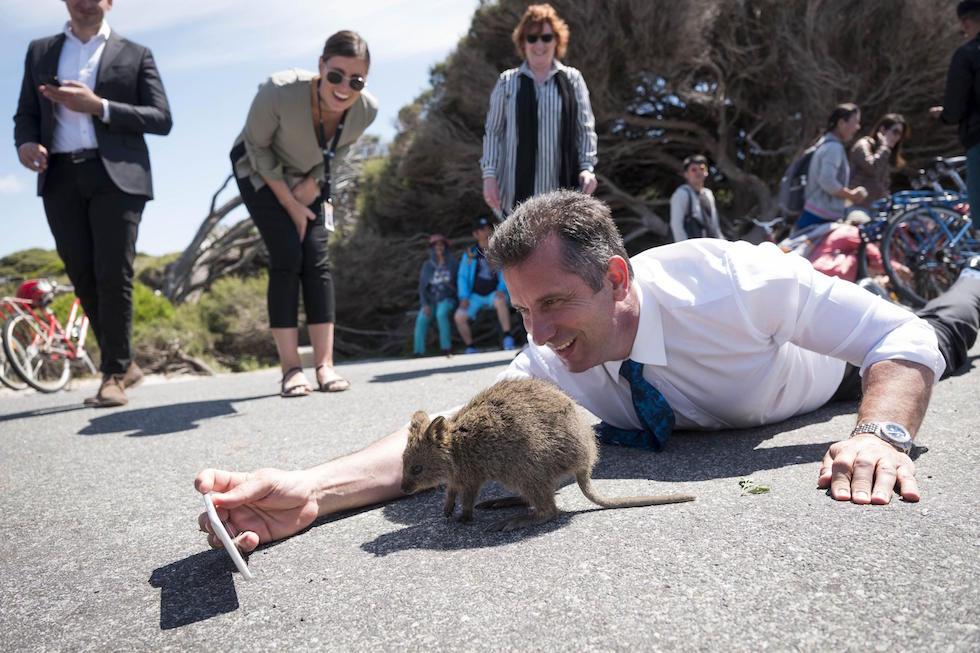 Il ministro del turismo australiano Paul Papalia sdraiato per terra per provare a farsi un selfie con un quokka, a Rottnest Island, in Australia (EPA/Tony McDonough/ANSA)
