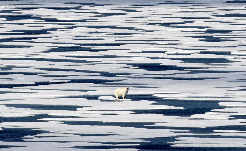 Un orso polare sul ghiaccio nello stretto di Franklin, nell'arcipelago Artico canadese, il 22 luglio 2017 (AP Photo/David Goldman)